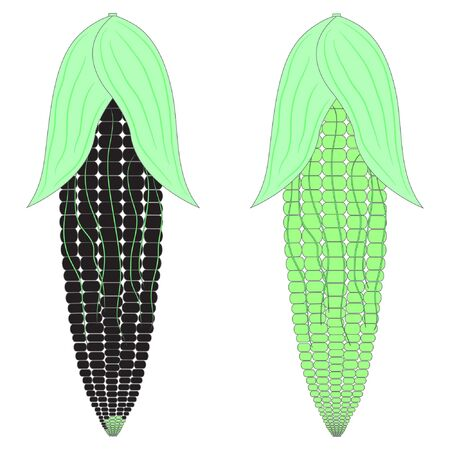 two corn black and green vector illustration. maize vector illustration. corn vector illustration. two green corn vector illustration.