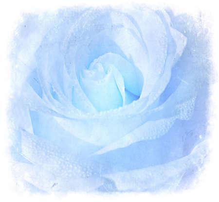 blue roses: Ice Blue Grunge Background With Beautiful Rose