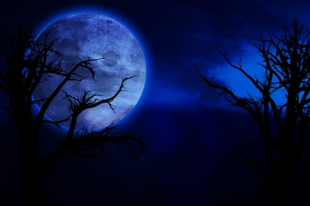 scary night: Scary, creepy forest at night and big full moon