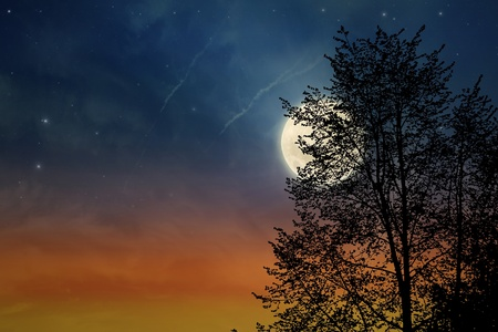 midnight time: Sunset tree and moon, silhouette of tree