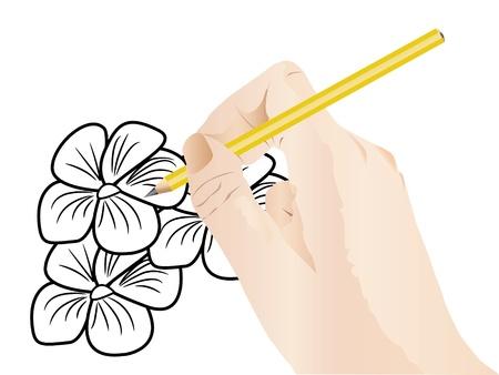 fingertip: Illustration of hand is drawing sketch of flowers  Illustration