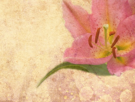 Abstract grunge background with pink lily photo