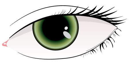 Illustration of beautiful green woman eye Stock Vector - 12898552