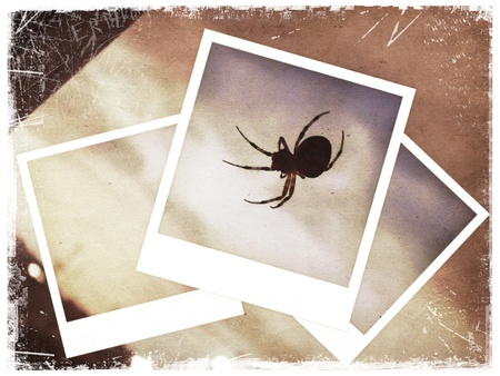 Polaroid collage of spider on old paper background photo