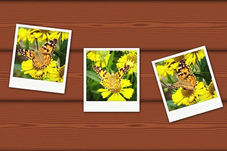 An old photo cards of butterfly on wood background Stock Photo - 13340818