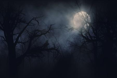 Illustration de corbeaux de nuit sur un fond d'arbres