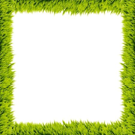Fresh green grass frame on white background  Stock Photo