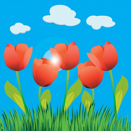 Illustration of tulip field and blue sky. Vector