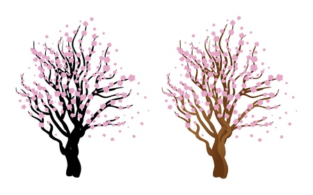 Illustration of Japanese cherry with blossom, sakura tree. Stock Vector - 17539810