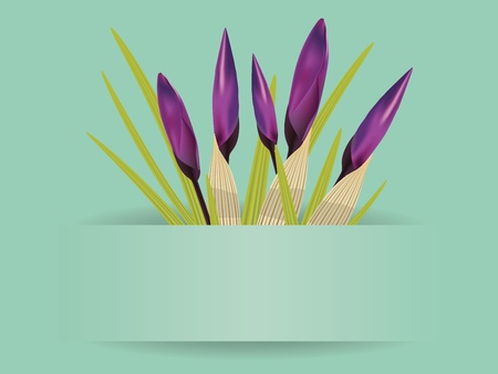 Spring card with bouquet of purple crocus flowers. Vector