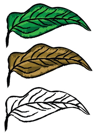 Three hand drawn leaves green, yellow and in black and white color. Vector