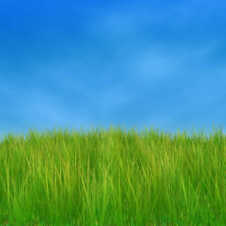Summer nature background with 3d green grass and blue sky. Stock Photo - 18686657