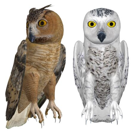 chirp: Digitally rendered image of eagle and snowy owls on white background. Stock Photo