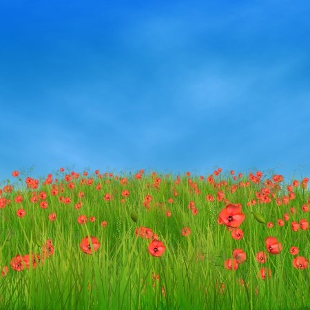 Spring nature background with 3d field of corn poppy flowers. photo
