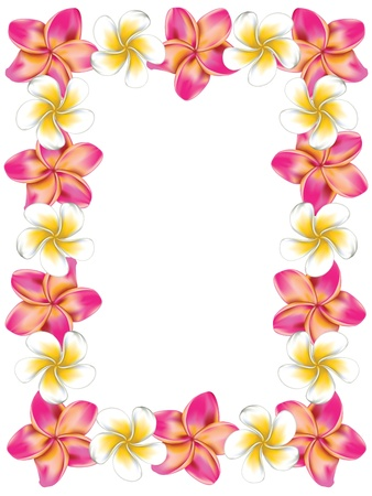 Floral frame made from white and pink plumeria, frangipani flowers.