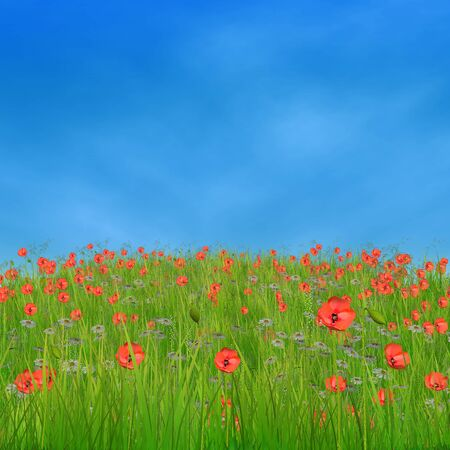 Spring nature background with 3d field of corn poppy flowers. Stock Photo - 18819520