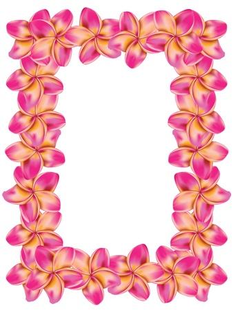 Floral cadre de plumeria, fleurs de frangipanier.