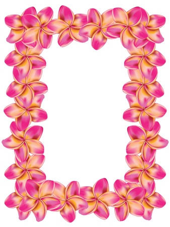 Floral frame made from plumeria, frangipani flowers.