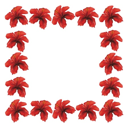 stigma: Floral frame made from red hibiscus flowers on white background.