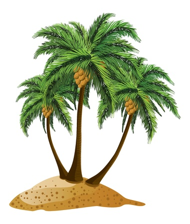 three palm trees: Small cartoon island and three palm trees over white background.