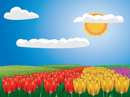 herbaceous border: Colorful spring background with tulip field and blue sky. Illustration