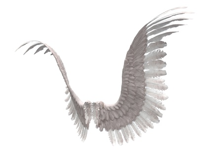 ange gardien: Image de rendu num�rique de blanc ailes d'ange � plumes.
