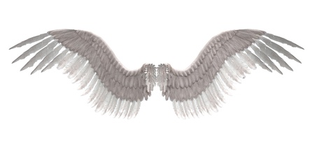 guard  guardian: Digitally rendered image of white feathered angel wings.