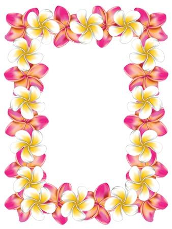 Floral frame fait de blanc et de rose plumeria, fleurs de frangipanier. Banque d'images - 21043463