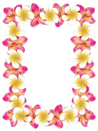 plumeria on a white background: Floral frame made from white and pink plumeria, frangipani flowers.