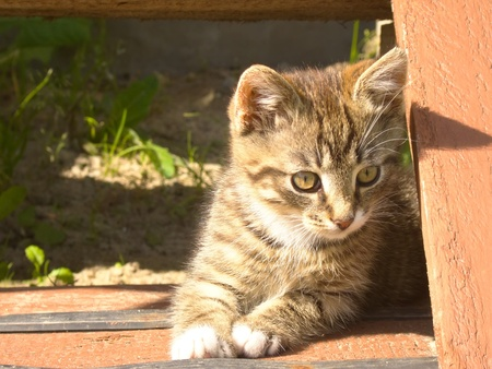 Funny little striped kitten on wooden stairs. photo
