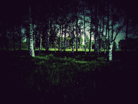 Dark mysterious trees with vintage effect. photo