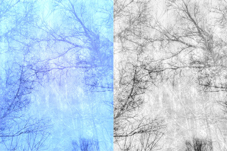 Abstract background with bare trees branches silhouettes. photo