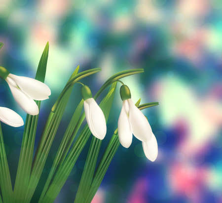 snowdrop: Blurred colorful bokeh background with snowdrop flower.