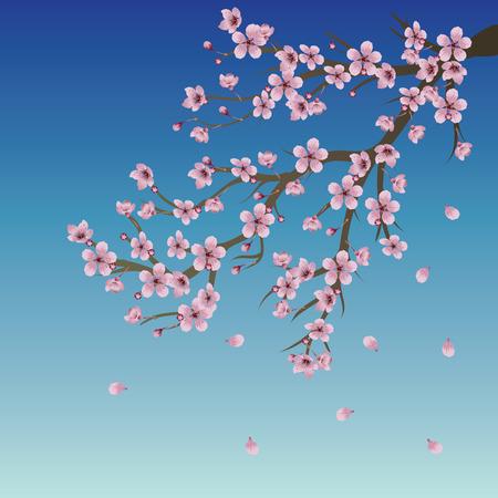 분홍색 벚꽃의 분기 푸른 하늘 배경입니다.