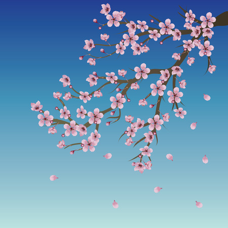 Blue sky background with branch of pink cherry blossom.
