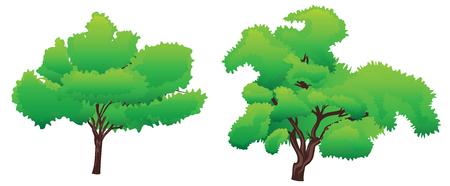 summer trees: Verano �rboles estilizados abstractos verdes sobre fondo blanco.