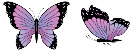 Abstract colorful butterfly illustration on white background.