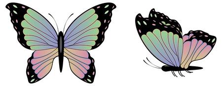 抽象的なカラフルな蝶の図は白い背景の上。