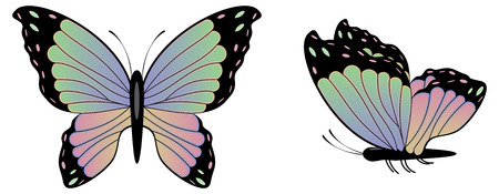 aerials: Abstract colorful butterfly illustration on white background.