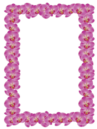 pink orchid: Illustration of pink orchid flower on white background. Illustration