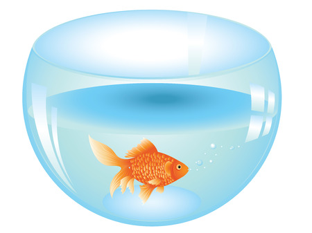 Cartoon gold fish swimming in the water in a fishbowl.