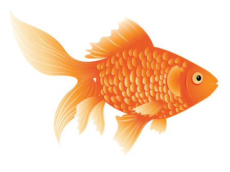 gold fish: Cartoon colorful gold fish on white background. Illustration