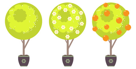 Cartoon stylized green tree with white flowers in spring and oranges in summer time.