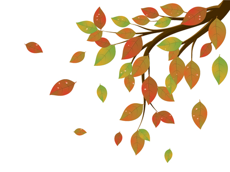 autumn leaves falling: Tree branch with colorful falling leaves, autumn season.