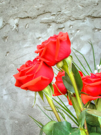 Bouquet with bright red roses over grunge concrete wall background. photo