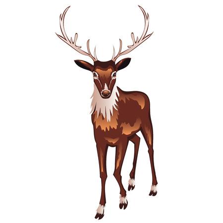 Deer Head Symbol Deer Symbol Deer Sign Deer Label Deer Design