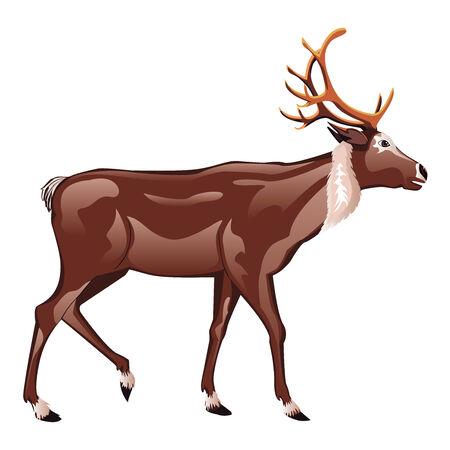 horny: Cartoon brown male deer illustration on white background. Illustration