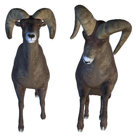 upright: Digitally rendered illustration of a big horn sheep on white background. Stock Photo