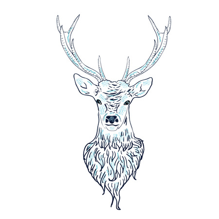 white tail deer: Head of a male deer in hand drawn style illustration.