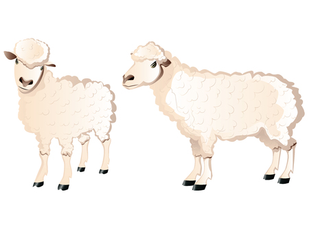 Two cartoon white sheeps illustration, farm animals.